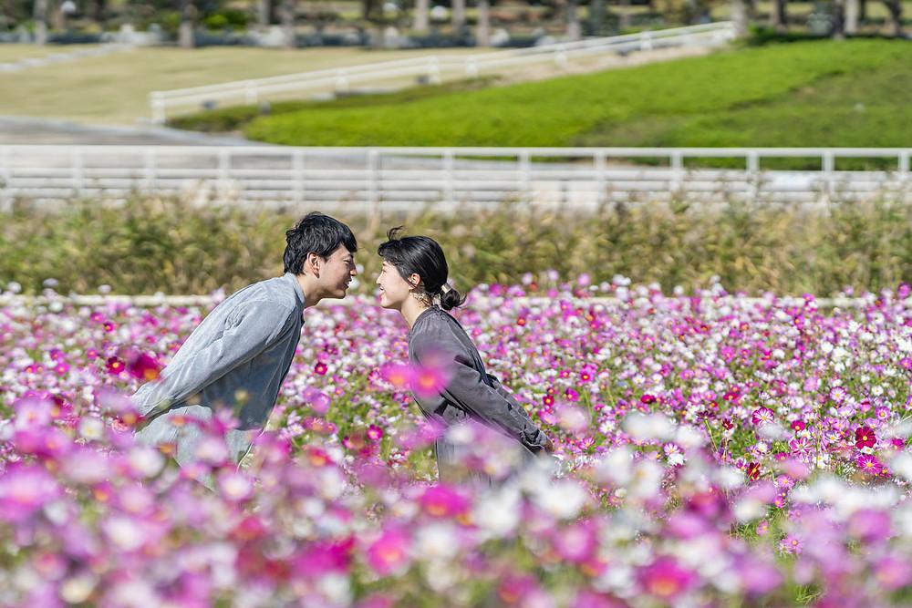 浜松のカメラマンがコスモス畑で撮影したエンゲージメントフォト
