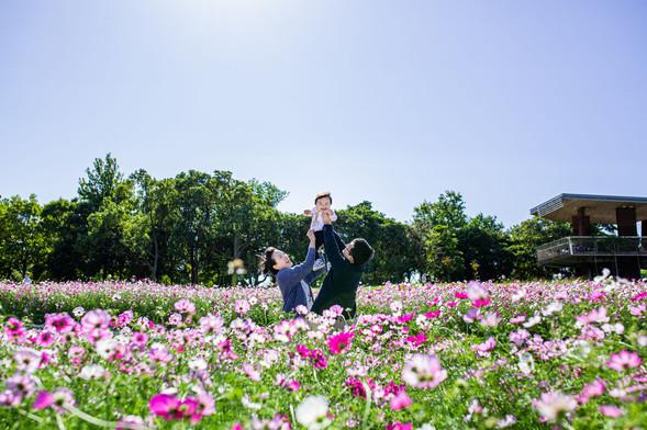 cosmos-hamanako-gardenpark-family-locati