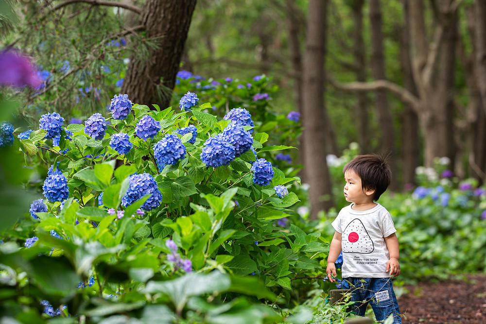 浜名湖ガーデンパークで撮影した紫陽花ロケーションでの子供写真