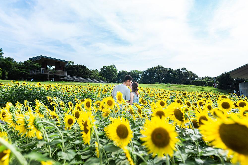 浜名湖ガーデンパークのひまわり畑で浜松のカメラマンが撮影した夏のエンゲージメントフォト