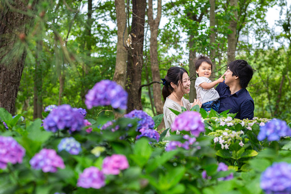 浜名湖ガーデンパークで撮影した紫陽花ロケーションでの家族写真