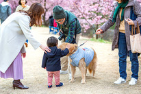 sakura-family-location-photo-067.jpg