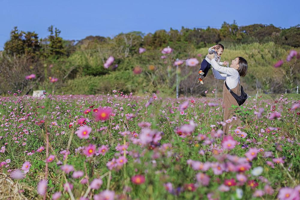 静岡県掛川市のコスモス畑で撮影したファミリーフォト