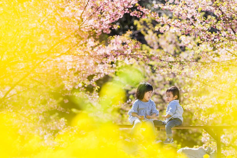 浜松の桜と菜の花ロケーションで撮影したキッズフォト