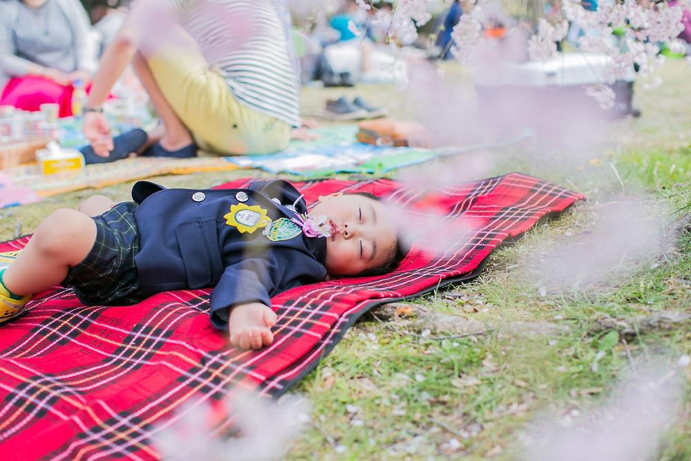 名古屋の庄内緑地公園で入学式後に疲れて眠る男の子と桜の写真