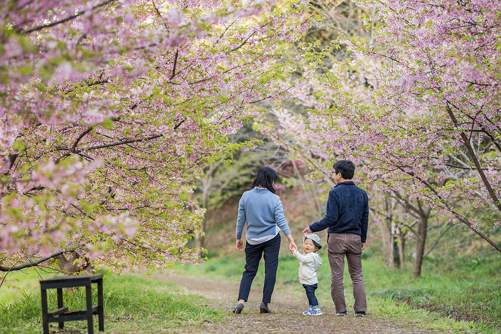 浜松市東大山の河津桜で撮影をしたファミリーフォト