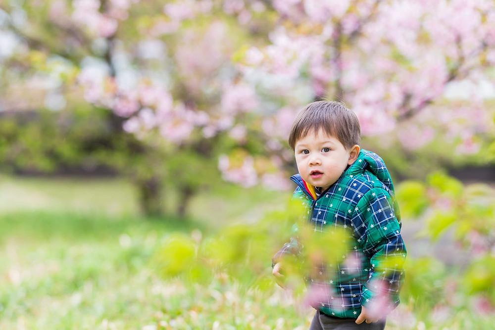 浜松市東大山の河津桜で遊ぶ様子を撮影した子供の写真