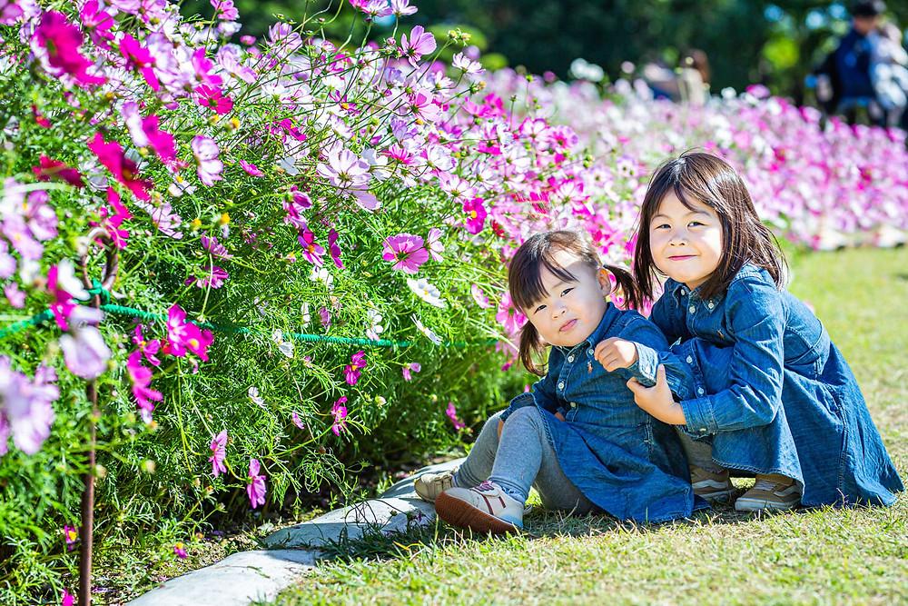 浜松のカメラマンがコスモス畑で撮影した子供の写真