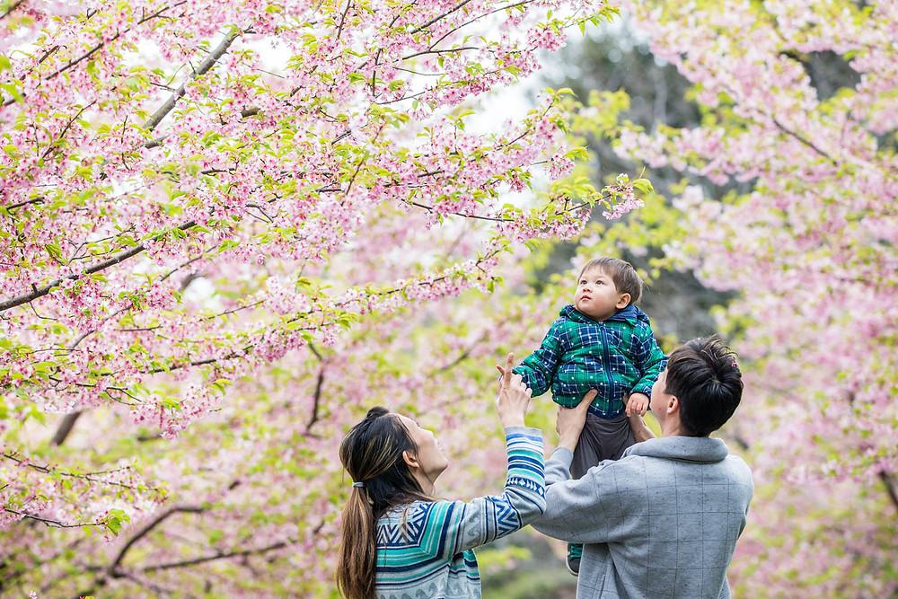 浜松市東大山の河津桜で高い高いをする家族を撮影したファミリーフォト