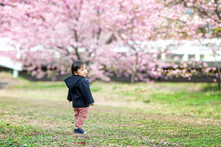 sakura-family-location-photo-051.jpg