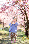 sakura-family-location-photo-071.jpg