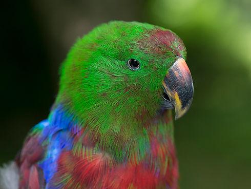 aviarypics_janbatch03.jpg