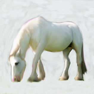 white-horse.png