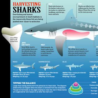 Harvesting Sharks