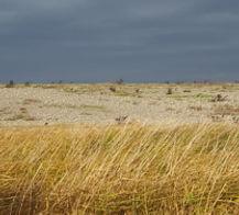 Beaux paysages de la flore et des galets dans la réserve naturelle du Hâble d'Ault au sud de la Baie de Somme
