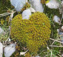 La nature nous offre une féérie de végétaux et de galets dans la réserve naturelle du Hâble d'Ault au sud de la Baie de Somme