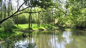 Le parc de la Bouvaque à Abbeville aux portes de la Baie de Somme, pour les amoureux de nature. Des arbres remarquables accompagnent la visite de ce parc riche d'une biodiversité des zones humides
