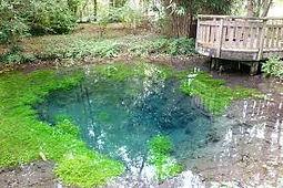 Le parc de la Bouvaque à Abbeville aux portes de la Baie de Somme, pour les amoureux de nature, des arbres remarquables et des sources bleues