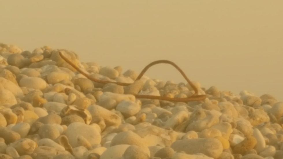 A la découverte des galets du littoral dans l'atelier de mosïque ou lors des balades art et nature en Baie de Somme