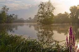Le parc de la Bouvaque à Abbeville aux portes de la Baie de Somme, pour les amoureux de nature. Observation de sa flore et sa faune, riches d'une biodiversité des zones humides.