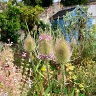Une biodiversité riche dans ce jardin remarquable à l'herbarium des remparts dans la cité médiévale de Saint-Valery-sur-Somme