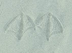 Empreintes de mouette prise sur le sable de la Baie de Somme lors des balades Art & Nature en Baie de Somme
