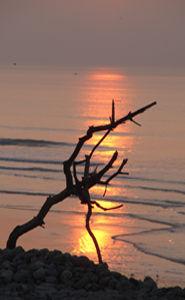 Balade slow life sur la plage de galets face aux lumières féériques de la réserve naturelle du Hâble d'Ault au sud de la Baie de Somme