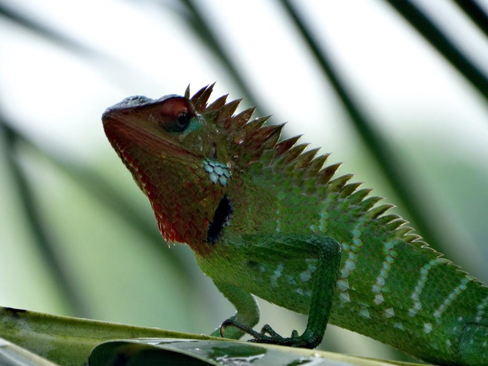 Tabula Rasa Resort-Fauna