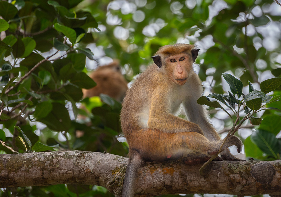Vasanava Spa, Galle, Sri Lanka I Monkey.
