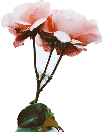 Flower-03.png