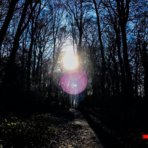 Amersham Woods