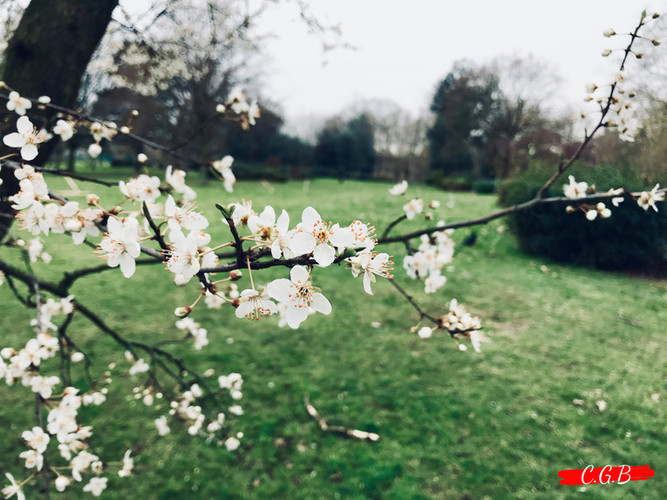 Finsbury Flowers