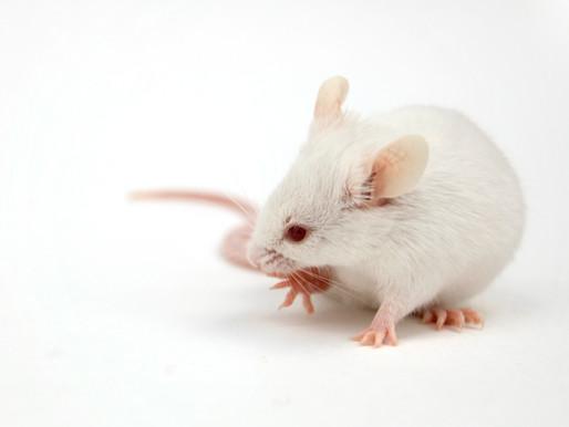 La luz nocturna afecta al sueño y a los comportamientos repetitivos en el modelo de ratón autista