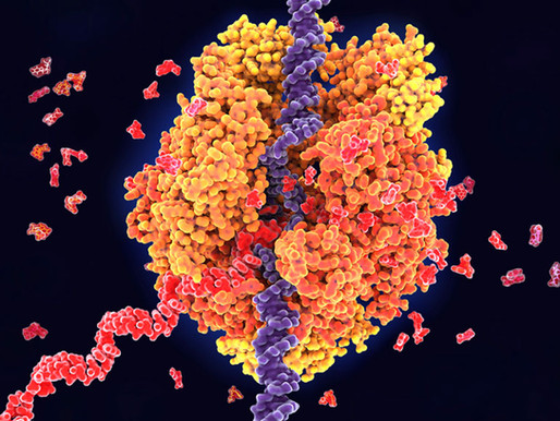 Una enciclopedia masiva cataloga las regiones reguladoras del genoma