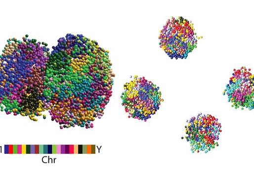 La secuenciación de células intactas revela una nueva visión de la estructura del genoma