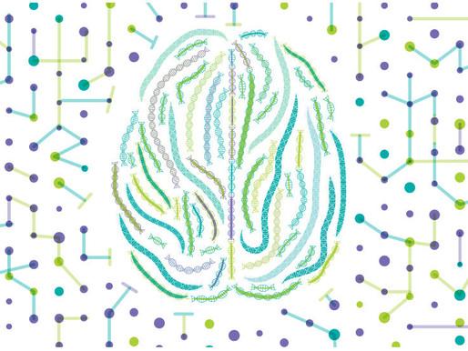 No hay genes específicos del autismo, sólo genes del cerebro