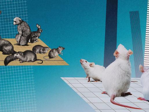 Un nuevo método estadístico puede evitar la muerte de animales de laboratorio