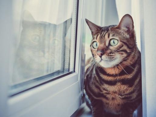 Los gatos podrían mejorar las habilidades sociales de los niños con autismo