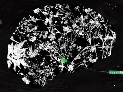 La amígdala, el detector de amenazas del cerebro, tiene un amplio papel en el autismo