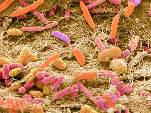 Un estudio indica que hay diferencias microbianas en los niños con autismo