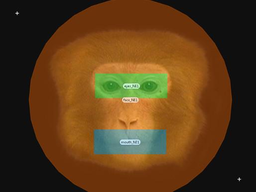 El tiempo que pasa un mono mirando un rostro puede predecir su comportamiento