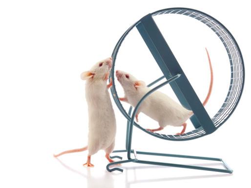 El bloqueador selectivo de enzimas alivia el síndrome del  cromosoma X frágil en ratones
