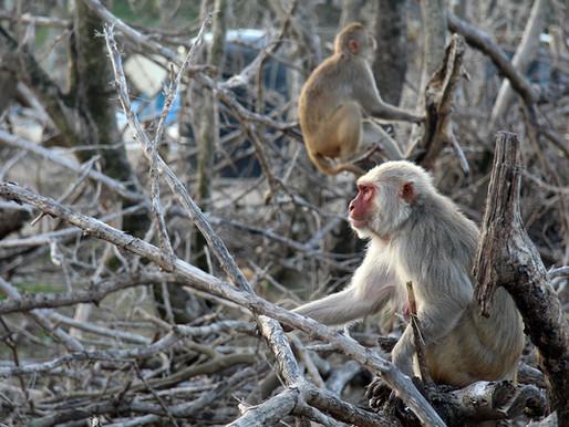 Amigos de los amigos: cómo los residentes de la isla de los monos se unieron tras el huracán María