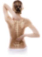 体の骨-215x300.jpg