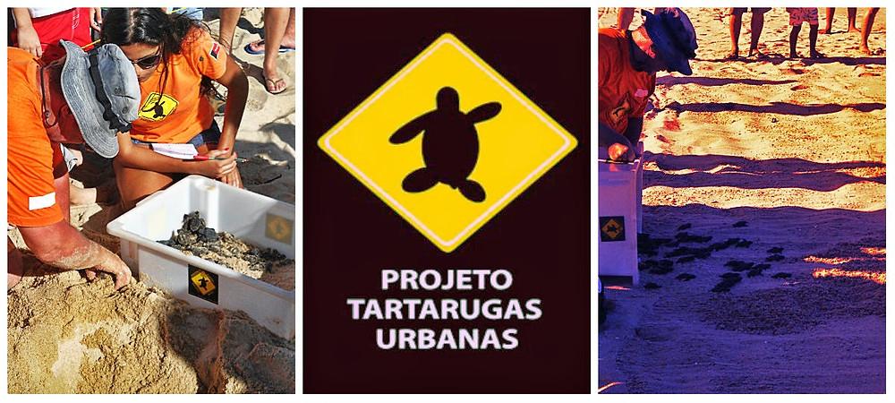 collage-tartarugas.jpg