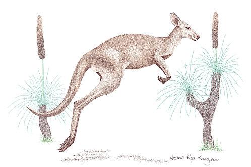 Original Western Red Kangaroo