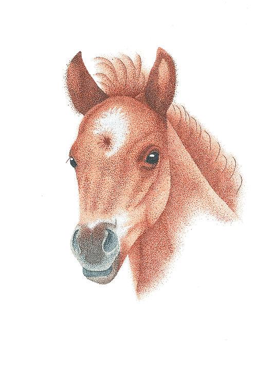 Brumby Foal #2