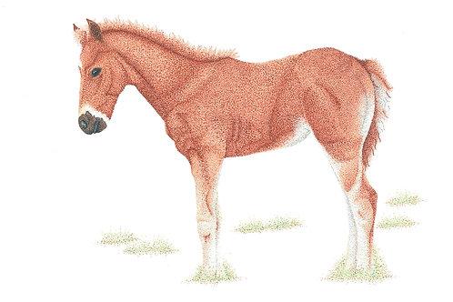 Brumby Foal #1