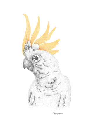 Cockatoo.jpg