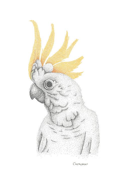 Original Cockatoo